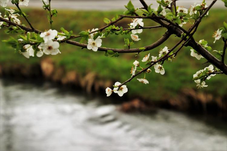 Pripreme za proljeće